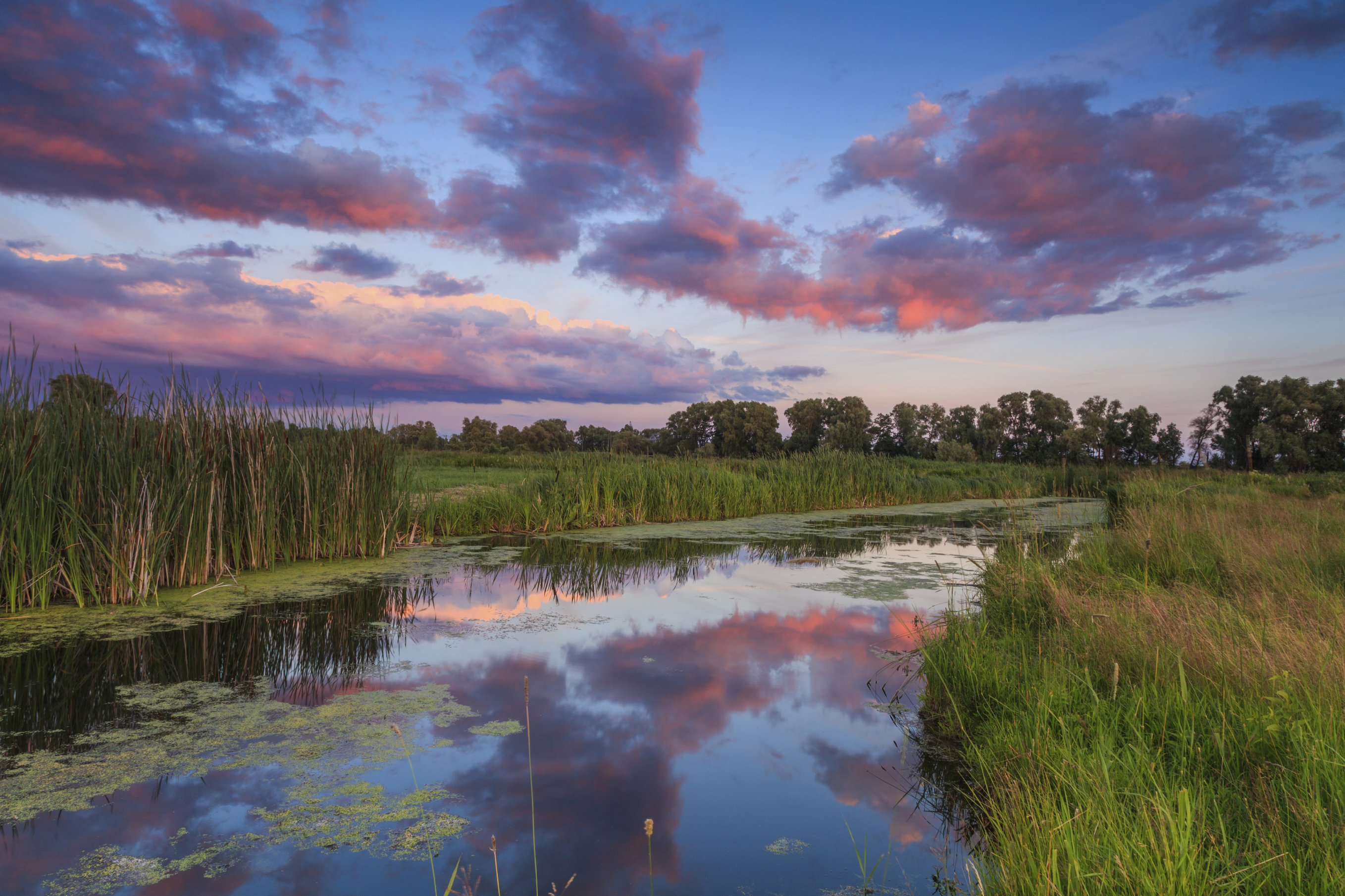 Sensitive wetland areas are protected under several state and federal programs and laws.