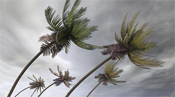 palm trees blowing in severe weather